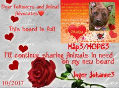 10/2/17 ❤️ DEAR FOLLOWERS AND ANIMAL LOVERS/ ADVOCATES! This board is full and I'll CONTINUE my work sharing Animals in need on my New Profile Inger Johanne3 - New Board HÅP3/GIVE HOPE3! (click on this picture) PLEASE FOLLOW/INVITE ME TO YOUR BOARDS IF YOU LIKE - and CONTINUE visiting/repinning my work❤️ I'll try to repin on your boards as much as I can❤️THANK YOU❤️ THE ANIMALS NEED YOU❤️