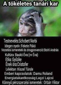 Lol orbán is benne van! És a matek? Bad Memes, Stupid Memes, Mind Trick Questions, Jokes Quotes, Funny Pins, Funny Moments, Funny Photos, Puns, True Stories