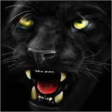 a fekete Imre Blogja - Google-keresés Panther, Google, Blog, Animals, Animales, Animaux, Blogging, Animal, Animais
