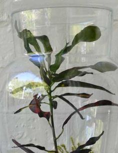 Elegance in glass Living Spaces, Glass Vase, Reception, Elegant, Design, Home Decor, Classy, Chic, Decoration Home