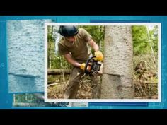 http://www.thetreewizards.com/    tree service columbia mo tree removal columbia mo tree pruning columbia mo arborist columbia mo stump grinding columbia mo landscaping columbia mo trees columbia mo