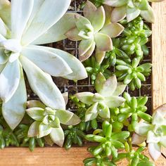 Build a space-saving planter that turns succulent plants into wall art. #verticalgarden #lowes