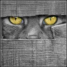 Ojos felinos que te pueden ver.