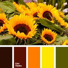 almost black color, color of leaves, color of sunflower, color of sunflowers, color selection for house, dark-orange color, dirty brown color, green color