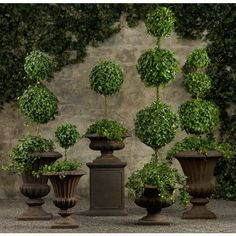 Live English Ivy Topiaries ($49) via Polyvore