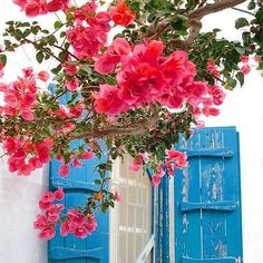 In love with these Mykonian colors . . #flowers #luxury #lifestyle #mykonos #mykonos2017 #summer #summer2017 #greekislands #greece #island #igers_greece #luxuryworldtraveler #picoftheday #igdaily #mikonos #myconos #mykonosisland #potd #igers #inspo #bestoftheday #mykonosguide