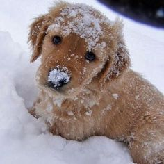 our heart is melting over this snow pup