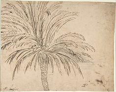 Study of a Palm Tree - Nicolas Poussin, ca. 1635–40