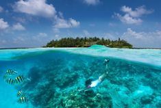 Sportive Girl Snorkels In Turquoise Waters Over A Coral Reef In The Maldives Stock Photo - Image of female, ocean: 113997918 Samana, Win Or Lose, Exotic Places, Windsurfing, Island Resort, Turquoise Water, Resort Spa, Asia Travel, Scuba Diving