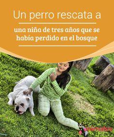 Un #perro rescata a una niña de tres #años que se había perdido en el bosque  Los que somos padres sabemos #perfectamente que no podemos perder de vista a #nuestros hijos ni un solo segundo. Poco más de ese tiempo #necesitan para liar alguna en casa.