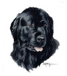 Watercolor art prints and originals by artist DJ Rogers by Dog Quilts, Watercolor Paintings, Painting Art, Watercolor Paper, Dog Portraits, Beautiful Dogs, Art Prints, Newfoundland Dogs, Art Decor