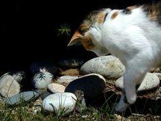 Gato de olho no rato - Fotos e fotos - Seu portal de imagens grátis