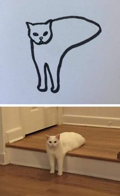 Cat Drawings