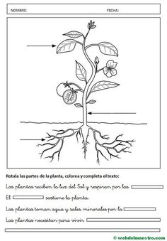 Partes de una planta- Actividades-2 1st Grade Worksheets, Science Worksheets, Preschool Learning Activities, Worksheets For Kids, Learning Centers, Classroom Activities, Weather For Kids, Flowers For Mom, Spanish Teaching Resources