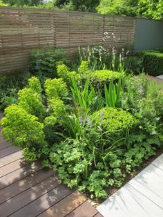 Even in a small garden its better to have one big deep planting bed full of great planting combinations rather than narrow beds around the garden.