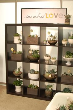 via Succulent Love