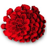 Bunch Of Red Roses For Rose Day