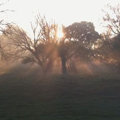 Beautiful sunrise turkey hunting