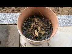 Macerato di Erbacce come fertilizzante o Weed Tea