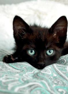 Not One Bit of Bad Luck, Here! What a Beautiful Kitten~❥