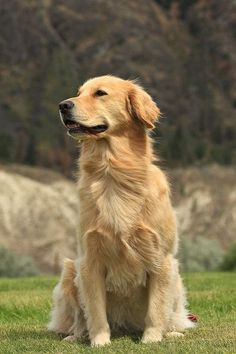 When Andrew Fales got word that a nearby breeder was going to euthanize an otherwise healthy Golden Retriever puppy from a recent litter just because the pup is blind, Fales knew he had to do something.