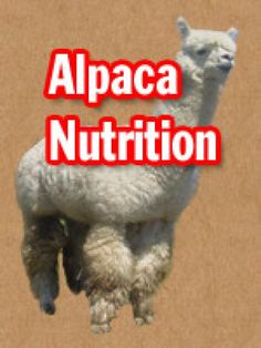 Alpaca Nutrition - Your Alpaca Resource for Sale and Purchase of Alpacas