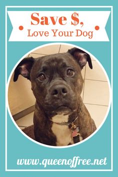 Caring for your dog doesn't have to cost a bundle! These practical tips will help your love your pup without breaking the bank. Love Pet, Puppy Love, Bull Boxer, The Wiggles, Animal Quotes, Losing You, Dog Friends, Saving Tips, Saving Money