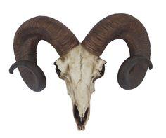 Cód. 107.078 - Cranio De Bode Oldway - 33x13x41