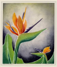 Bird of Paradise by C. Conkey 1937