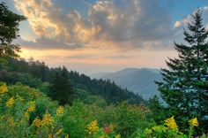 Tomorrow is the birthday of America's most visited national park, home to more than 17,000 species and 3 national champion trees. Happy Birthday, Great Smoky Mountains NP! Learn more about great family travel ideas at www.cruiseandtravelmasters.com!
