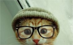 """Hipster kitteh says, """"Oh, you're just learning about Tasteh Kitteh Noms now? Mah, I've liked that brand of cat treats since back when they were being made by one dude in his garage!"""" :D #cute #hipster #kitty #cat #kitten #lolcat #glasses"""