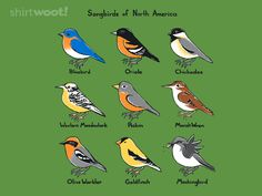 Great t-shirt! Look carefully. Songbirds of North America