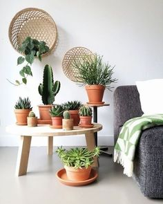 Körbe als Wanddekoration - super Trendy und kombiniert mit Kakteen, Sukkulenten. - Suja - Welcome to the World of Decor! Cactus Decor, Plant Decor, Cactus Art, Jungle Vibes, Cacti And Succulents, Hanging Succulents, Cactus Plants, Green Plants, Indoor Plants