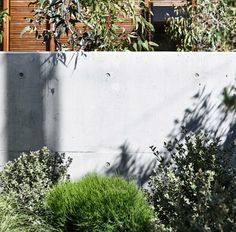 Austrostipa stipoides, casuarina glauca 'green wave' and Correa alba Australian Native Garden, Native Plants, Backyard Landscaping, Palm Beach, Landscape Design, Acre, Grass, Native Gardens, Sidewalk