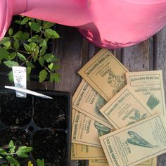 Like most things in the gardening world the question of planting seeds or transplants can have various answers depending on which gardener you ask. Like the saying goesthe only thing two gardener...