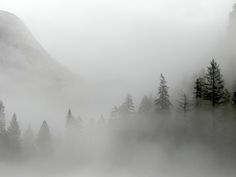 Trees In The Mist. El Portal California [OC] [4000x3000]