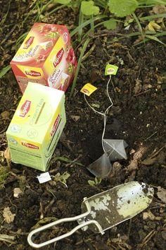 tea bag plant food