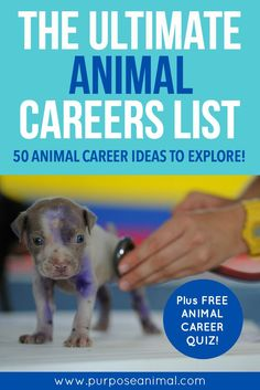 The Ultimate Animal Careers List – 50 Animal Career Ideas To Explore! – Purpose Animal The Ultimate Animal Careers List – 50 Animal Career Ideas To Explore! – Purpose Animal,Her indecisive college board Are. Jobs With Animals, List Of Animals, Zoology Career, Veterinarian Career, Veterinarian Quotes, List Of Careers, Career Quiz, Dog Tags Military, Animaux
