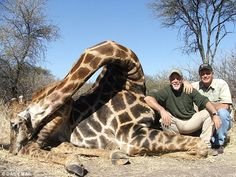 Gotta admire the blatant stupidity of this duo. The giraffe hunters who pay £10,000 to shoot the gentle giants with guns and bows for sport.  Hunting Giraffe Safari. Price $ 3800. Help us stop this madness! Sign the petition against this here: http://www.theperfectworld.com/petitions/item/23-hunting-giraffe-safari-price-00-help-us-stop-this-madness  If you know these clowns re-pin their names and this picture and link it here: http://www.giraffeconservation.org/