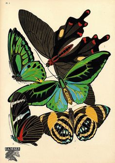 Seguy - Papillons (1), via phoenixxx9000