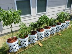 Learn About Cutting Edge Gardening Techniques! The Self Watering Rain Gutter Grow System, The Kiddie Pool Grow System,The Pop Bottle Garden, also the Hybrid Underground Rain Gutter Grow System! Hydroponic Growing, Hydroponic Gardening, Bucket Gardening, Container Gardening, Gardening Tips, Sustainable Gardening, Flower Gardening, Container Plants, Vegetable Gardening