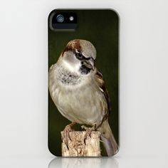 House Sparrow iPhone & iPod Case by Laura George - $35.00