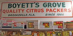 """""""Boyett's Grove on Spring Lake Highway. Long-time home to the Boyett family who have been farming citrus since the 1960's, the attraction is now operated by daughter Kathy and husband Jim Oleson. They have created a classic old Florida destination complete with an old Florida gift and citrus packing shop, kids amusement activities, a real zoo, miniature golf, a museum, an ice cream fountain and art shop - all under one roof."""""""