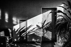 Jane Star Photograph - Clinic - Jungle #7 by Jane Star  #JaneStar #Black&White #Jungle #BlackShadows #ArtForHome #InteriorDesign #HomeDecor