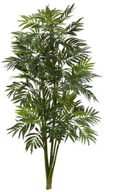 Nearly Natural 3 Mini Bamboo Palm Artificial Plant Bamboo Palm, Bamboo Plants, Palm Plant, Trees To Plant, Backyard Trees, Plants Online, Interior Plants, Green Landscape, Plant Illustration