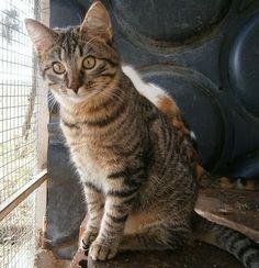 Gato Monte. No te pasará desapercibido. Animals, Kittens For Adoption, Animal Pictures, Foot Prints, Gatos, Animales, Animaux, Animal, Animais