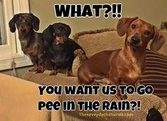 Pee in the rain