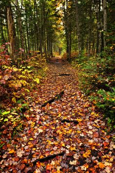 7 Gorgeous Spots for Fall Colors: Algonquin Park, Ontario, Canada
