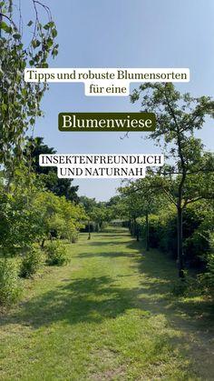 Gardening, Freundlich, Flower Beds, Garden Planning, Garden Projects, Planting Flowers, Bouquet, Country Roads, Blog