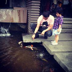 Feeding fish Koi pool